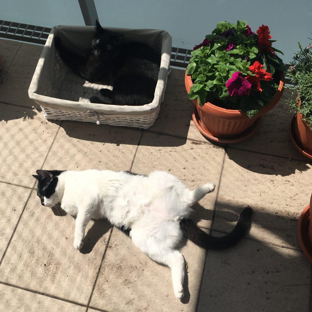 Zdjęcie dwóch kotów wylegujących się na balkonie